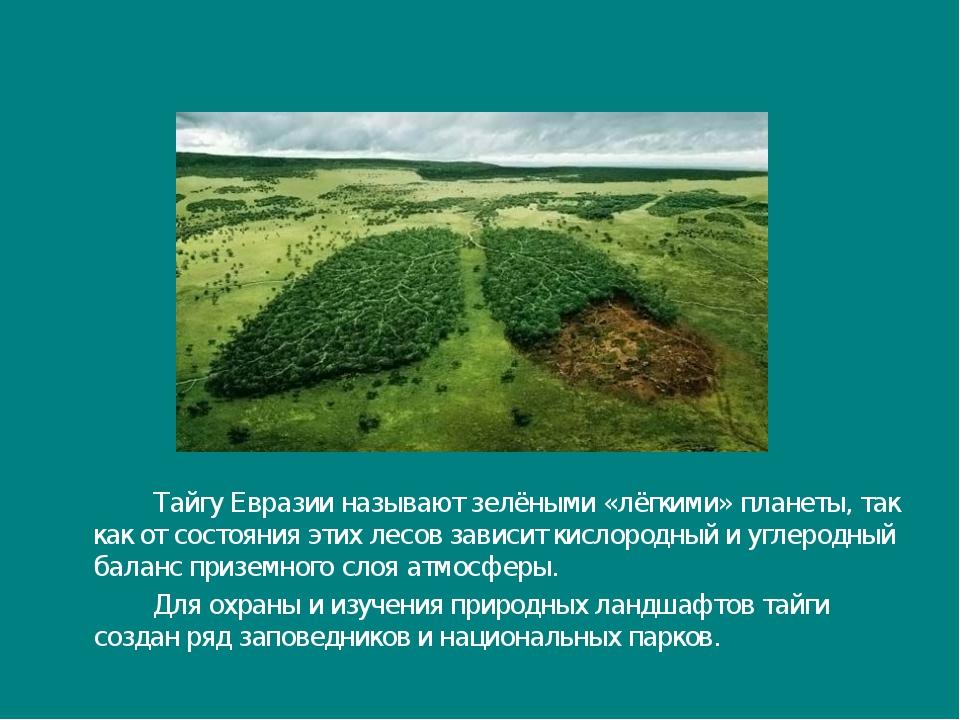 Тайгу Евразии называют зелёными «лёгкими» планеты, так как от состояния эти...