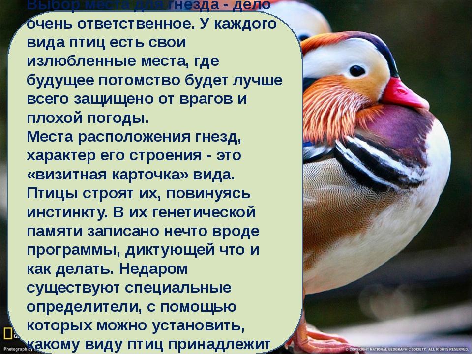Выбор места для гнезда - дело очень ответственное. У каждого вида птиц есть с...