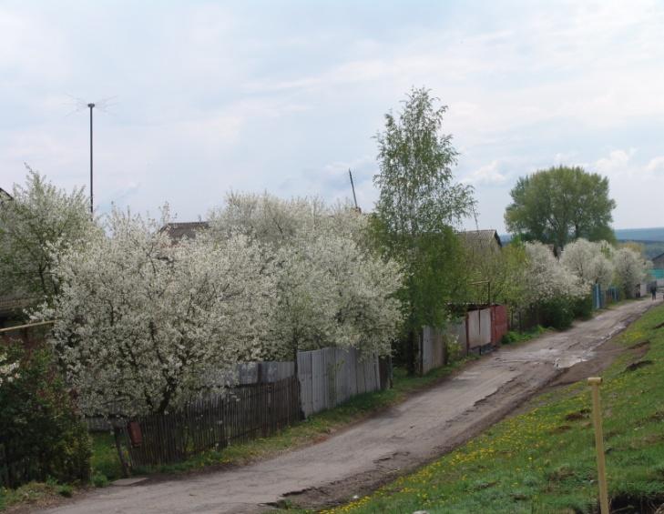 D:\Планы\Домашняя\Картинки и ФОТО и мои Фильмы\ФОТО\Весна\Наше село. Фото\Фото\DSC06708.JPG