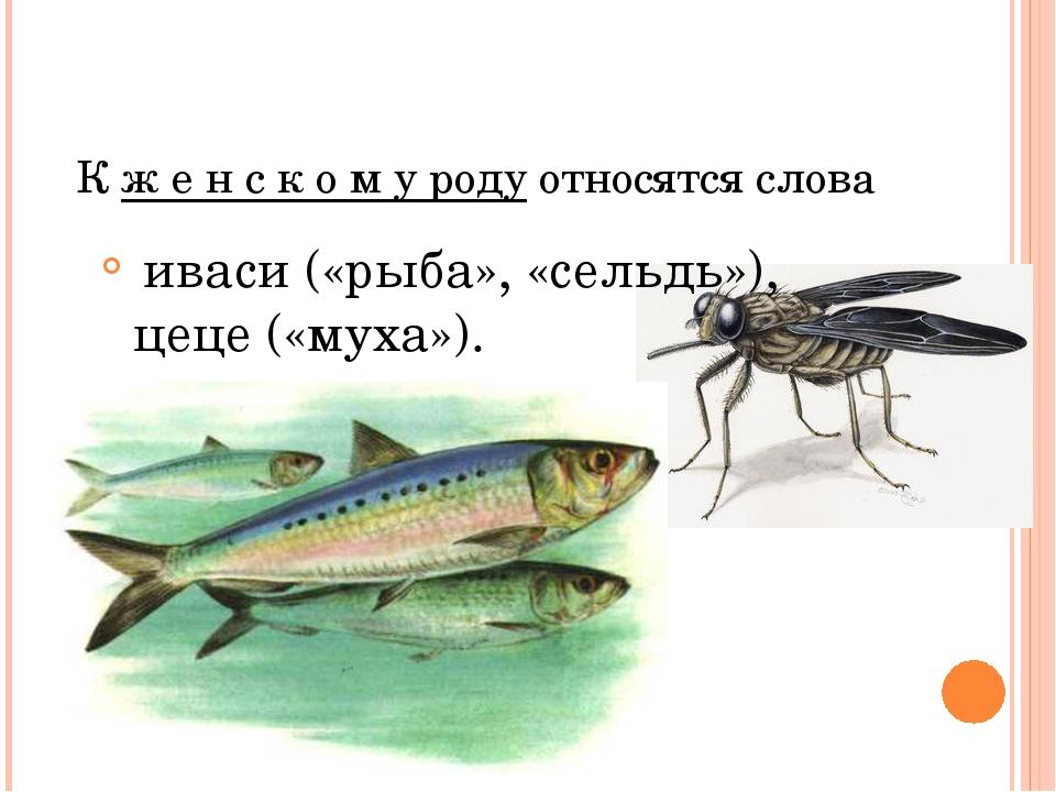 Кженскомуродуотносятсяслова иваси(«рыба», «сельдь»), цеце(«му...