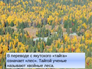 В переводе с якутского «тайга» означает «лес». Тайгой ученые называют хвойные