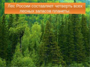 Лес России составляет четверть всех лесных запасов планеты.
