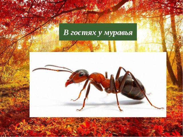 В гостях у муравья