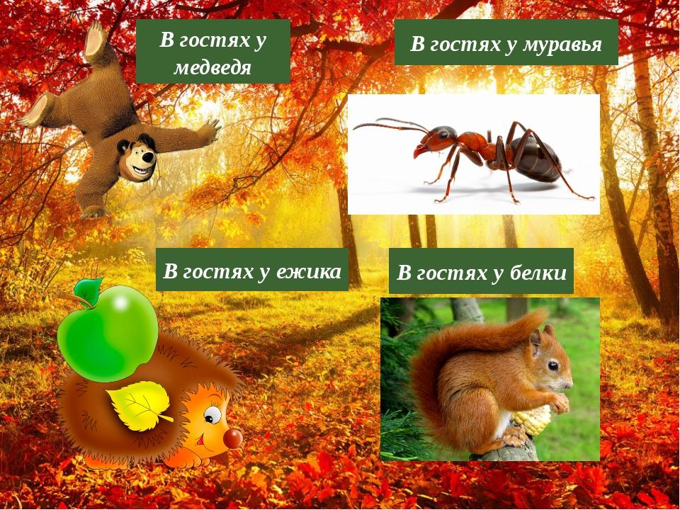 В гостях у ежика В гостях у медведя В гостях у муравья В гостях у белки