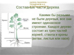 Составные части дерева Какими бы разными не были деревья, все они имеют одина