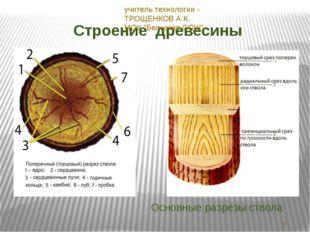 Строение древесины Основные разрезы ствола 23.11.2013 учитель технологии - ТР