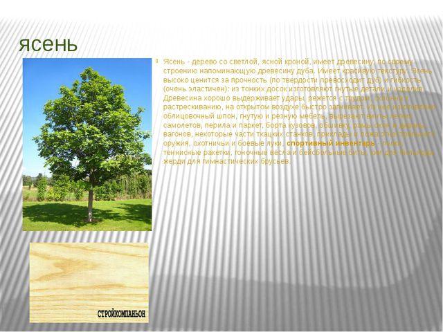 ясень Ясень - дерево со светлой, ясной кроной, имеет древесину, по своему стр...