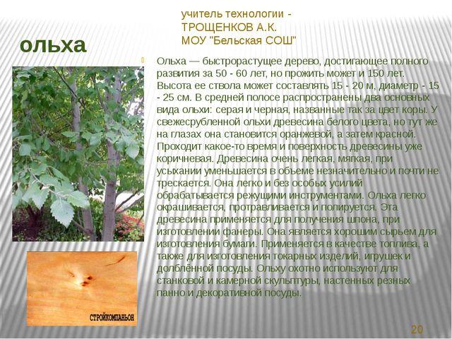 ольха Ольха — быстрорастущее дерево, достигающее полного развития за 50 - 60...