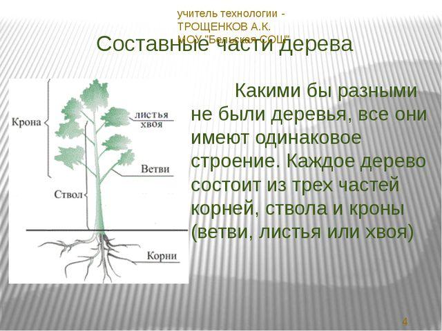 Составные части дерева Какими бы разными не были деревья, все они имеют одина...