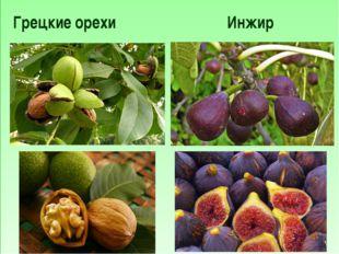 Грецкие орехи Инжир