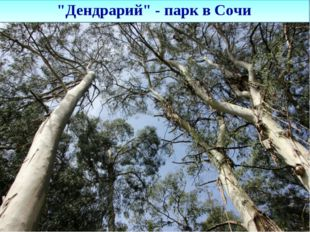 """Дендрарий"" - парк в Сочи"