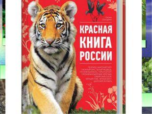 Иглица колхидская Тис ягодный Жужелица кавказская Черноморская афалина Самшит