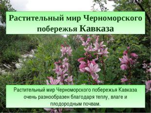 Растительный мир Черноморского побережья Кавказа Растительный мир Черноморско