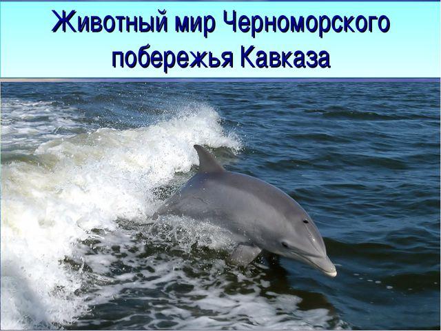 Животный мир Черноморского побережья Кавказа