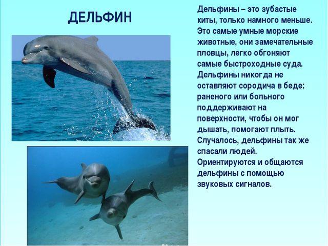 ДЕЛЬФИН Дельфины – это зубастые киты, только намного меньше. Это самые умные...