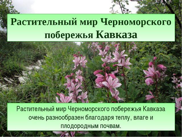 Растительный мир Черноморского побережья Кавказа Растительный мир Черноморско...