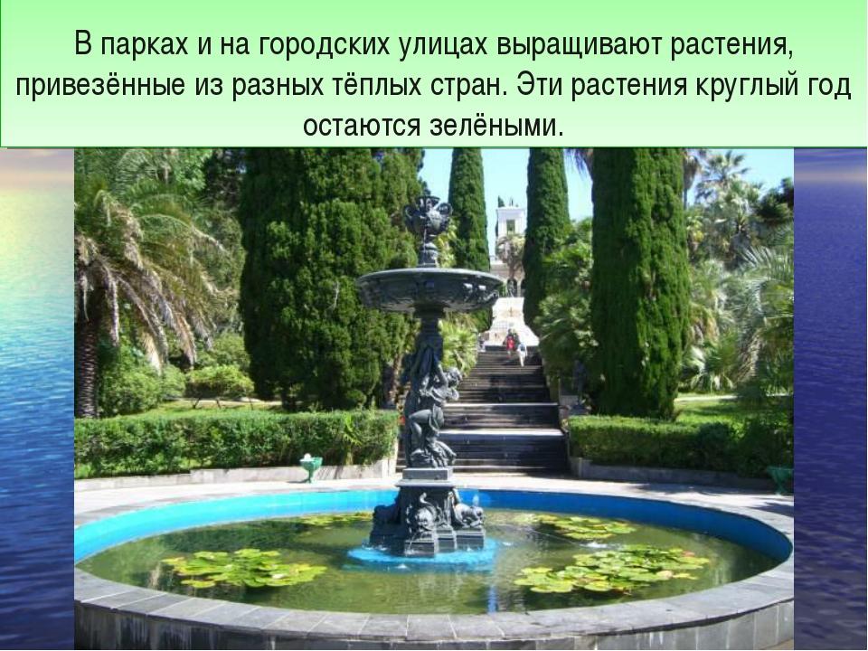 В парках и на городских улицах выращивают растения, привезённые из разных тё...