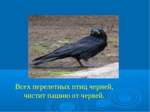 Всех перелетных птиц черней, чистит пашню от червей.