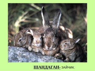 ШАНДАГАН- ЗАЙЧИК,