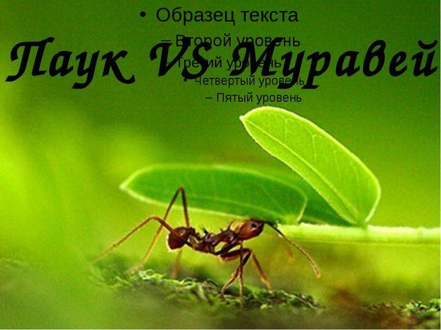 Паук VS Муравей