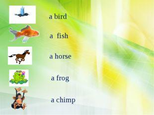 a bird a fish a horse a frog a chimp
