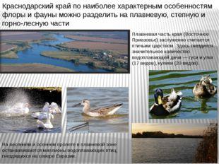 Плавневая часть края (Восточное Приазовье) заслуженно считается птичьим царст