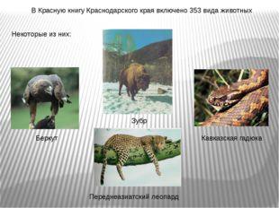 В Красную книгу Краснодарского края включено 353 вида животных Некоторые из н
