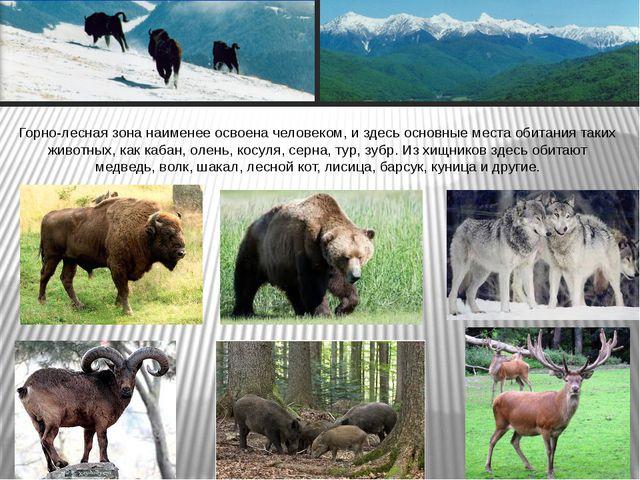 Горно-лесная зона наименее освоена человеком, и здесь основные места обитания...