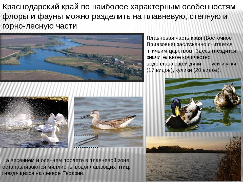 Плавневая часть края (Восточное Приазовье) заслуженно считается птичьим царст...