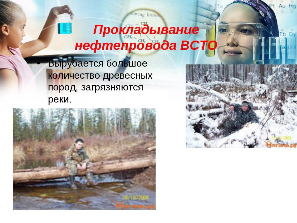 Прокладывание нефтепровода ВСТО Вырубается большое количество древесных пород...