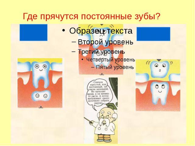 Где прячутся постоянные зубы?