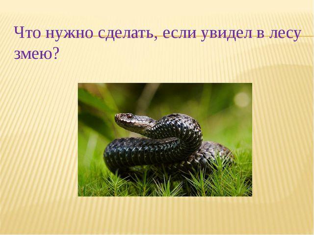 Что нужно сделать, если увидел в лесу змею?