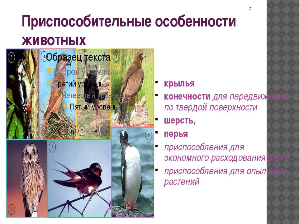 Приспособительные особенности животных крылья конечности для передвижения по...