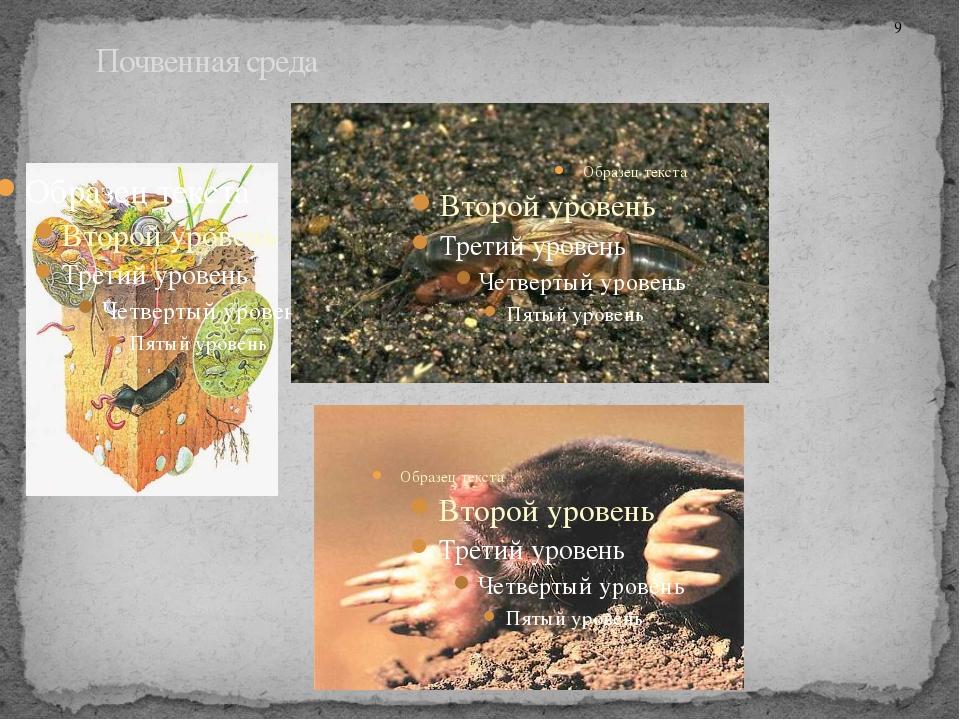 Почвенная среда 9