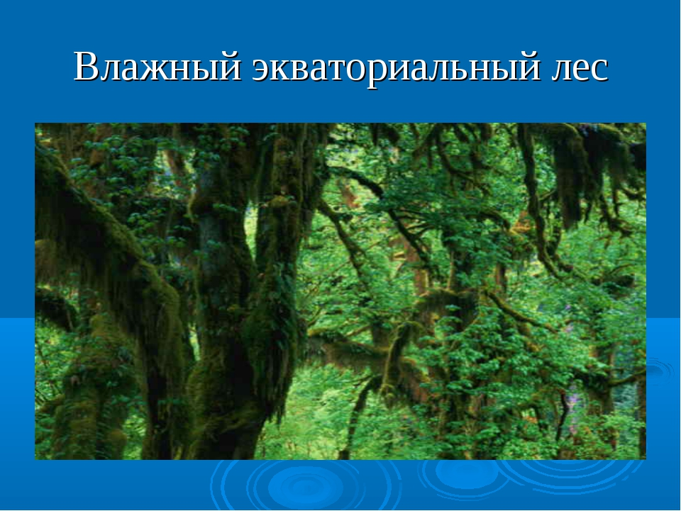Влажный экваториальный лес