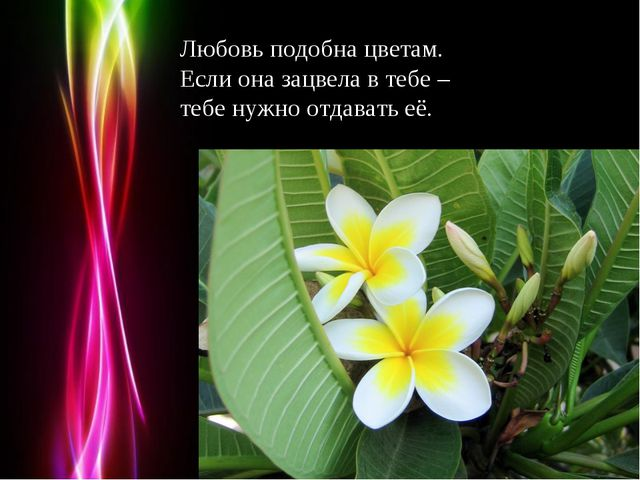 Любовь подобна цветам. Если она зацвела в тебе – тебе нужно отдавать её. Powe...