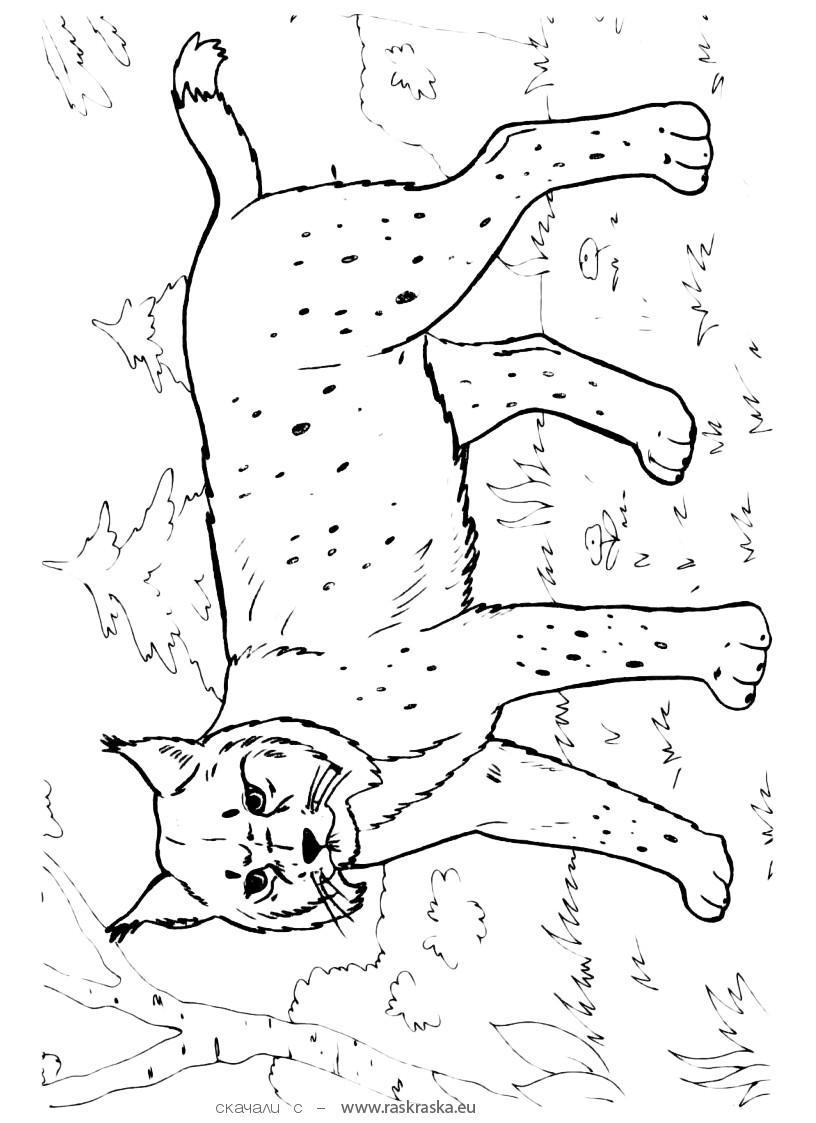 Картинка 3 из 10159