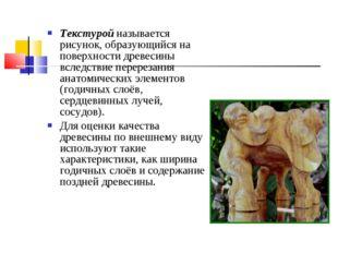 Текстурой называется рисунок, образующийся на поверхности древесины вследстви