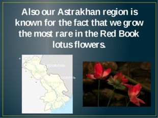 Also our Astrakhan region is known for the fact that we grow the most rare in