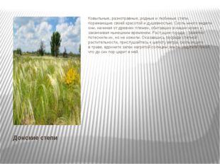 Донские степи Ковыльные, разнотравные, родные илюбимые степи, поражающие сво