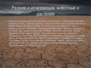 Редкие и исчезающие животные и растения Многие животные и растения пустынь и