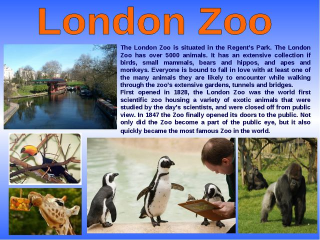 The London Zoo is situated in the Regent's Park. The London Zoo has over 5000...