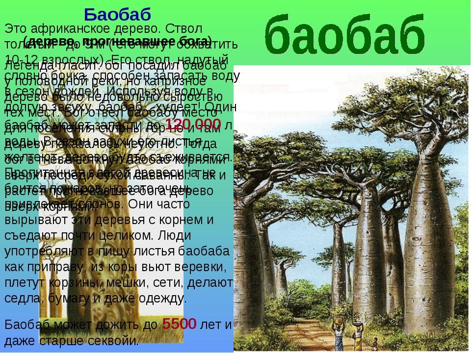 Баобаб (дерево, прогневавшее бога) Легенда гласит: бог посадил баобаб у полов...