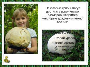 Некоторые грибы могут достигать исполинских размеров: например некоторые дожд