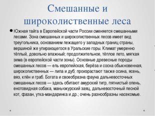 Южная тайга в Европейской части России сменяется смешанными лесами. Зона смеш