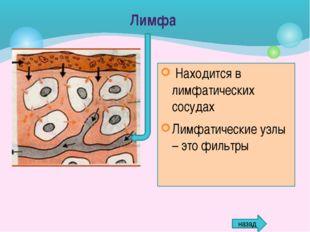Местоположение в организме – между клетками тканей Объем – 26,5% от массы тел
