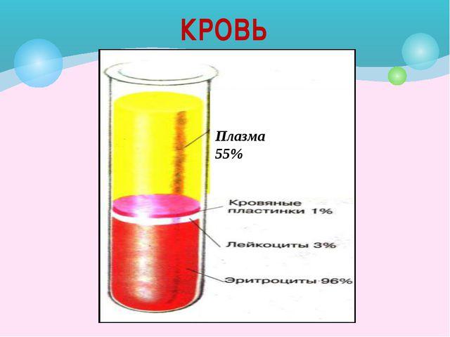 Лейкоциты Белые кровяные клетки Хорошо развито ядро Неправильной (амёбоидной)...