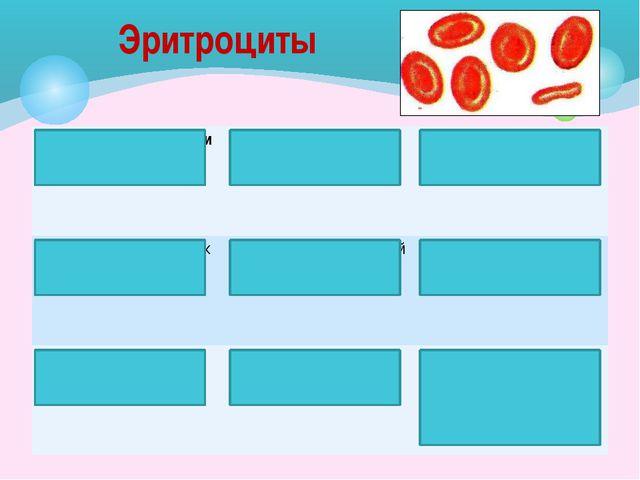 Тромбоциты Кровяные пластинки Круглой или овальной формы Безъядерные Превраще...