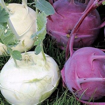 Виды разной капусты- кольраби