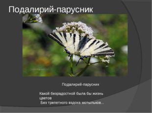 Подалирий-парусник Подалирий-парусник Какой безрадостной была бы жизнь цветов